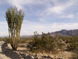 Ørken landskabspleje ideer til boligen