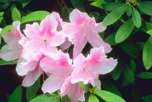 Tropiske planter på udkig værftet