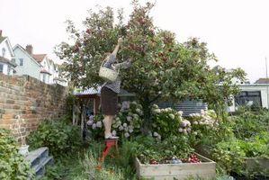 Hvordan man forebygger Storm afstrømning vandskader i din have