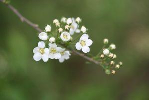 Blomstrende planter, elsker solskin