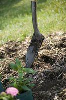 Hvordan man kan tage en haven jordprøve til test