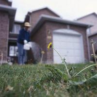 Hvordan til tilså græsfrø efter anvender ukrudtsbekæmpelse