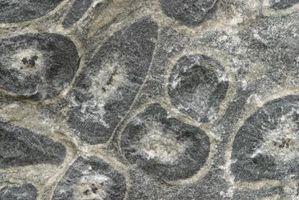 Vejledning i brugen af diatoméjord