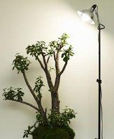 Halogen lys til planter