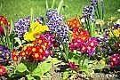 Sådan starter du din egen blomsterhave