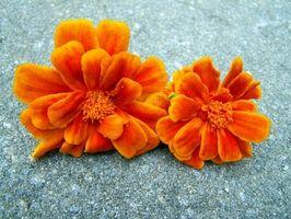 Blomster anvendes til kanterne omkring en gravsten have Patch