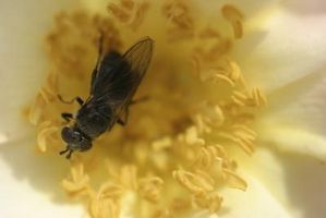 Hvordan landskabet omkring Bee nældefeber