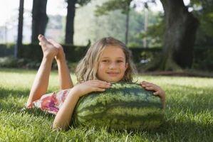 Hvordan at vokse en stor vandmelon