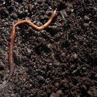 Planternes vækst med regnormene