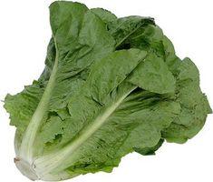 Voksende Romaine salat: Krav og problemforebyggelse