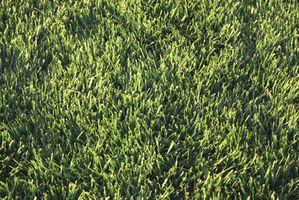 Tidlige forår græsplæne behandling