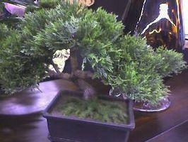 Typer af Bonsai træer