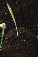 Formålet med fosfat gødning
