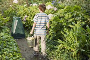 Hvordan man laver din egen orm kompost Bin for børn