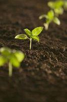 Hvordan man laver beriget jord til højbede og vokse kasser