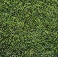 Sådan bruges Merit for larver i græsplænen