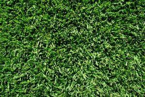 Vil Frost Kill nye græs?