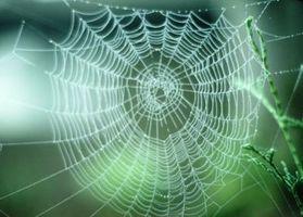 Liste over edderkopper i Connecticut