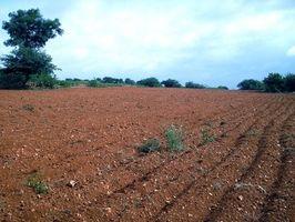 Jordbearbejdning & plantning