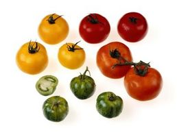 Er Sungold tomat planter enorme?