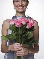 Økologisk behandling af dunede meldug på roserne