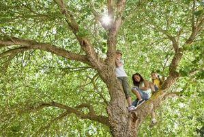 Hvordan til at beskære træer & vokse nye noder