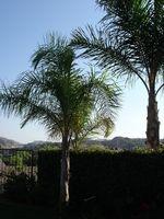 Palm Tree trimning udstyr