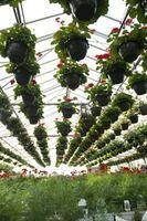 Hvordan man opbygger et drivhus fordampning køler