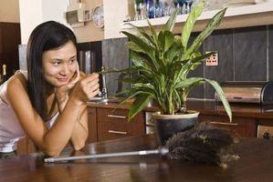 Helbredelsesmetoder for Over vandes stueplanter