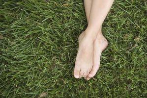 Hvornår man skal plante St. Augustine græs i Texas