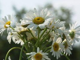 Hvordan man laver blomsterarrangementer til en piedestal