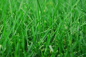 Det bedste tidspunkt af året at frø græsplæne