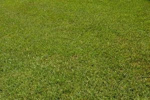 Økologisk måder at slippe af græsplæne ukrudt