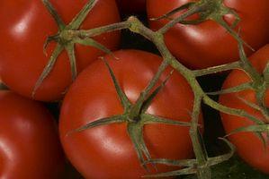 Hvordan man forebygger tomat plante visnesyge