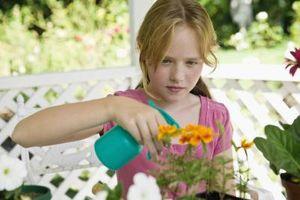 Hvordan til at sprøjte planterne med opvaskemiddel
