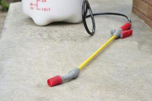 Sådan Spray mit hus for Bugs