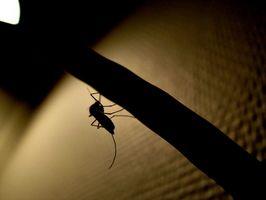 Mål af myggebalsam