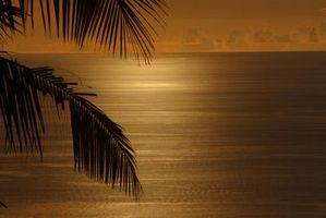 Hvordan man kan Give et værelse en tropisk følelse