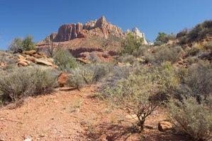 Hvor hen til bagatellisere klimaanlægget brug i Nevada