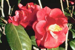 Året rundt udendørs planter & blomster