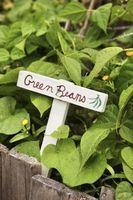 Sådan Stop bønne frø fra voksende & gemme dem bruge næste år