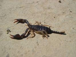 Cedar sengetøj & skorpioner