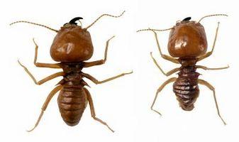 Spray til brug for at slippe af termitter
