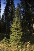 Forskelle mellem stedsegrønne og løvfældende skove