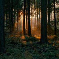 Hvordan man laver dit soveværelse Look som en skov om natten