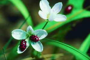 Mariehøns & blomster Design