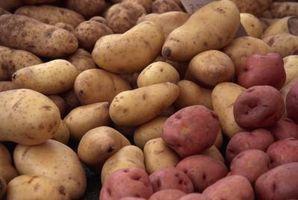 Hvordan man undgår kartoffelskimmel