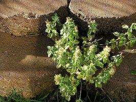 Hvordan til at plante en støttemur