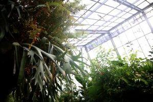 Hvordan at vokse i en vinter drivhus