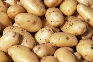 Kartoffel høst opbevaring